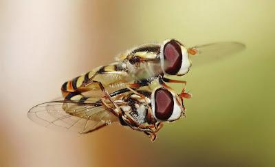 Fotografías de insectos como Arañas, Abejas, Moscas, Catarinas, y Gusanos