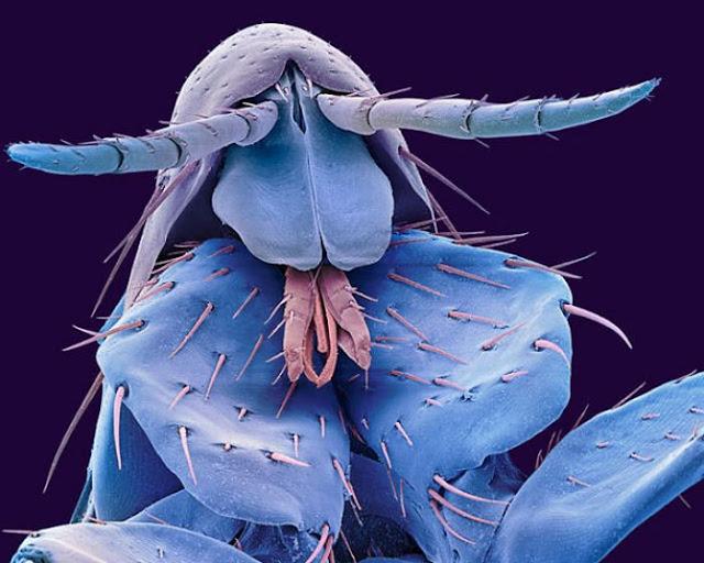 Micro Monstruos