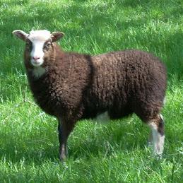 Natasha 2009 lamb