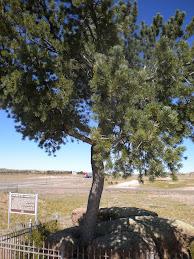 Tree Rock