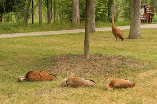 Sandhill Cranes - Now and Then