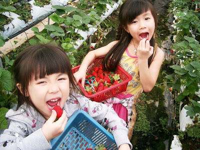 strawberry eating at the farm is prohibited!!