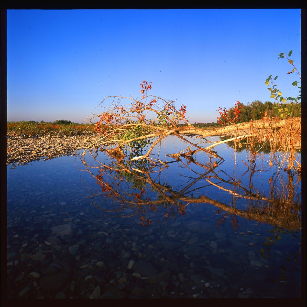 Ansa del fiume taro Taro