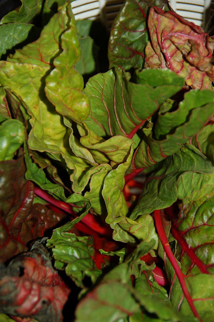 Swiss Chard With Olives Recipe — Dishmaps