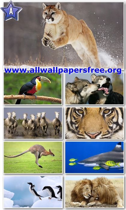 40 Amazing Animals Wallpapers Full HD 1080p [Set 3]