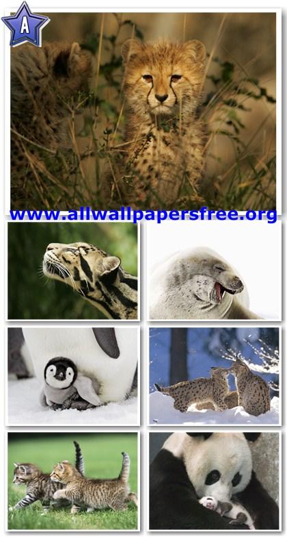 100 Amazing Animals Wallpapers 1600 X 1200 [Set 8]
