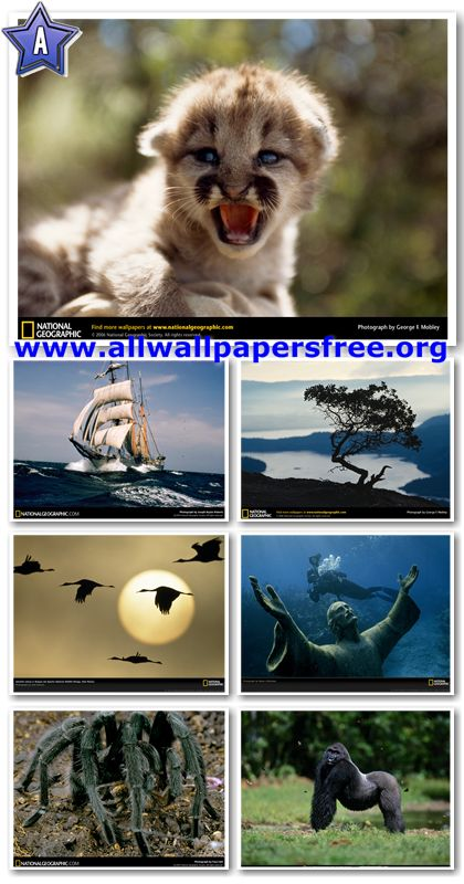 500 National Geographic Wallpapers 1024 X 768 [Set 5]