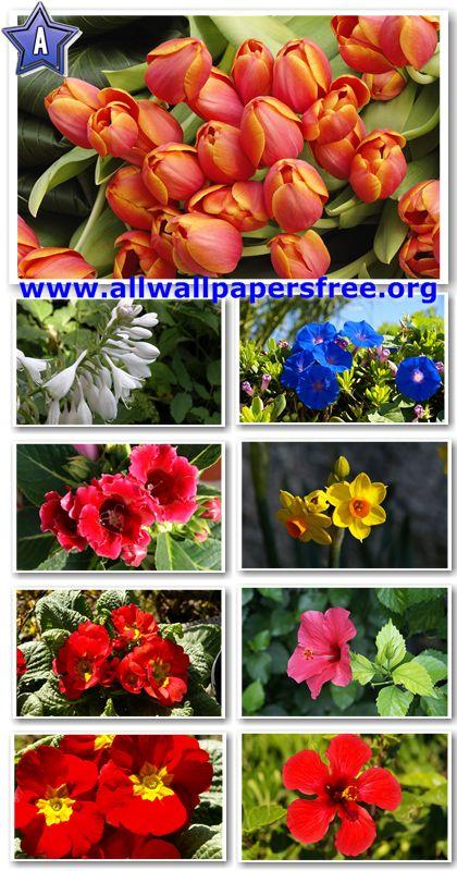 40 Beautiful Flowers Wallpapers 1920 X 1200 [Set 11]