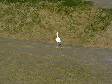 egret on the Adur
