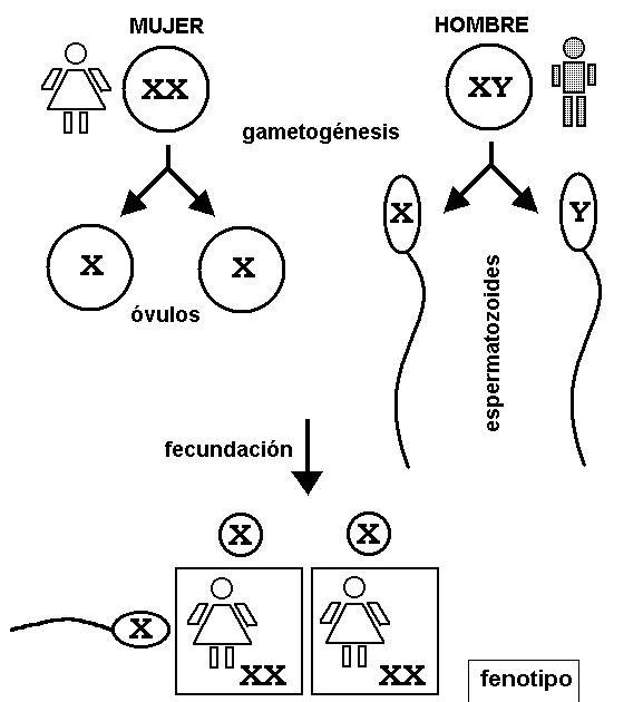 Cromosomas sexuales en reptiles