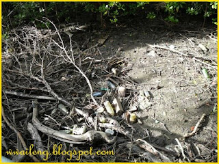 Rubbish in Mangrove Park