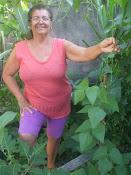 Pé de feijão que foi plantado para os gêmeos João Vinícius e Carlos Henrique - 16-08-2010