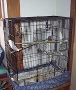 Bachelor Cage