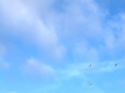birds flying in the spring sky