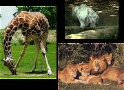 También podrán observar videos de animales salvajes con su respectivo .