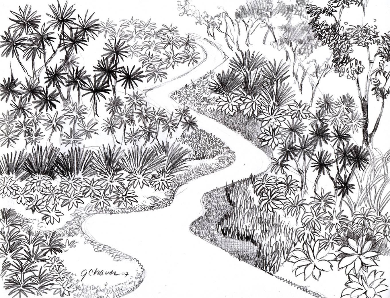 Arbol de guanacaste dibujo imagui for Dibujos de jardines