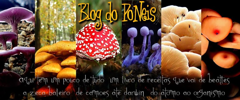 Blog do Poneis