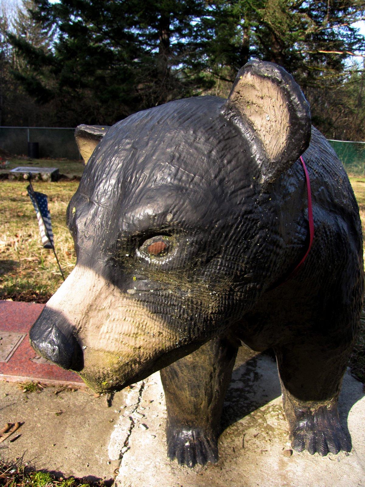 [bear+(old+carson)]