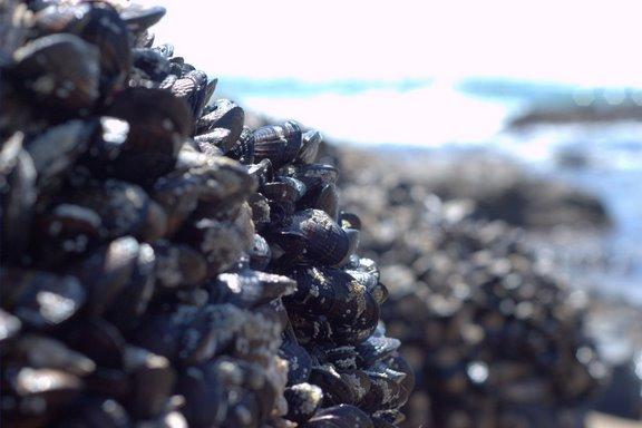 [Mussels+at+Beach.jpg]