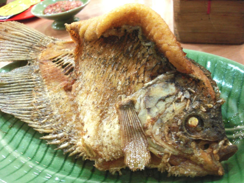 Gourami Fish Eggs