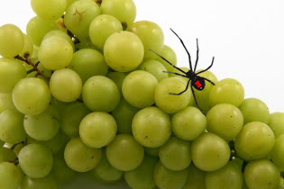 grapes spider 7 Quick Takes (vol. 2)