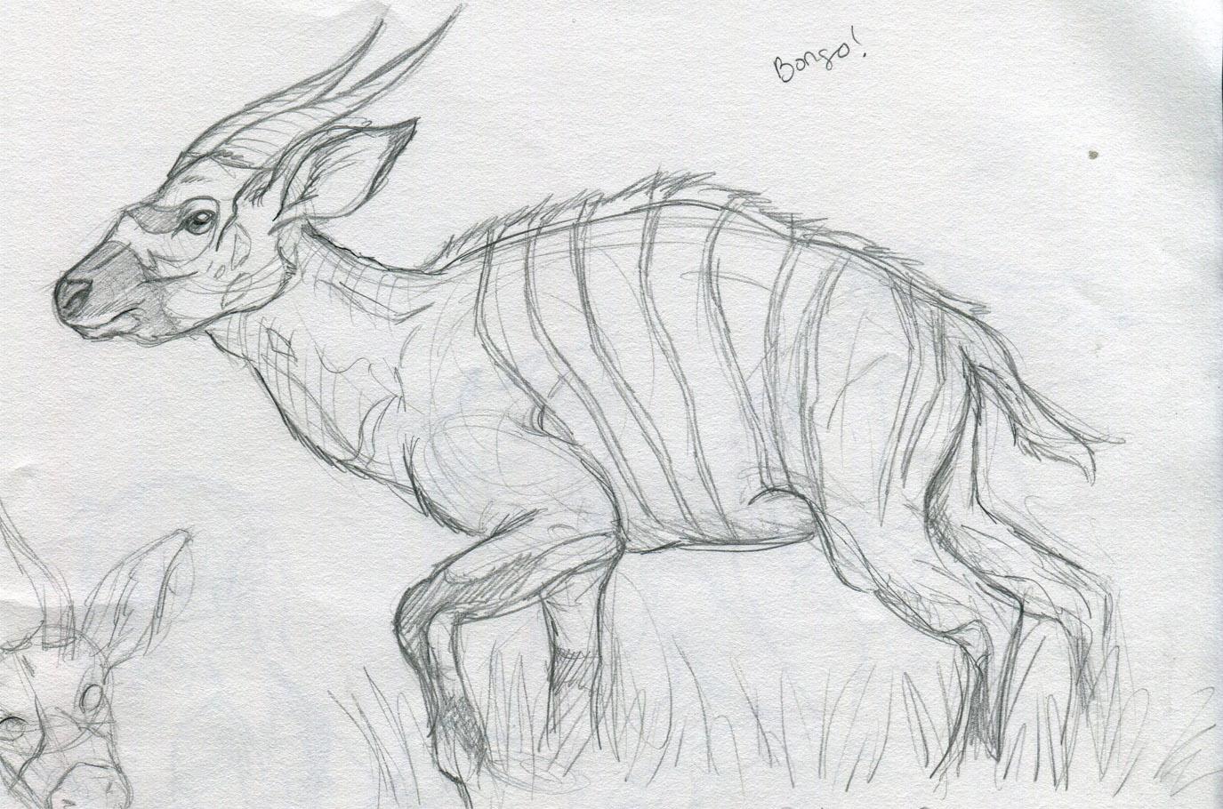 Http Refrigigator Blogspot Com 2010 08 Animal Sketch Bongo Html