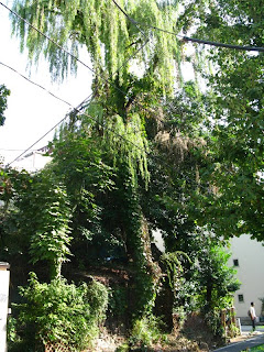 Kameido backstreets - lost Tokyo