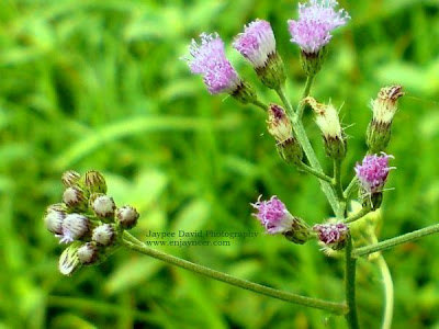 Jaypee David, Nature Shot, Macro, Photography, Clark Pampanga