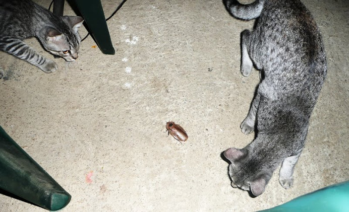 Kittens score a monster bug (I let it go while it still had all its appendages).