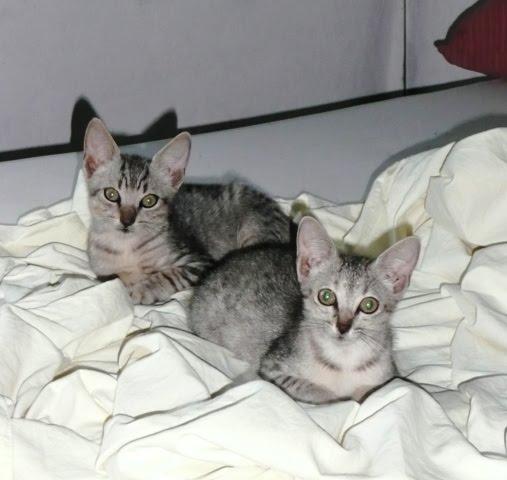 Leo & Luna, 5 wks