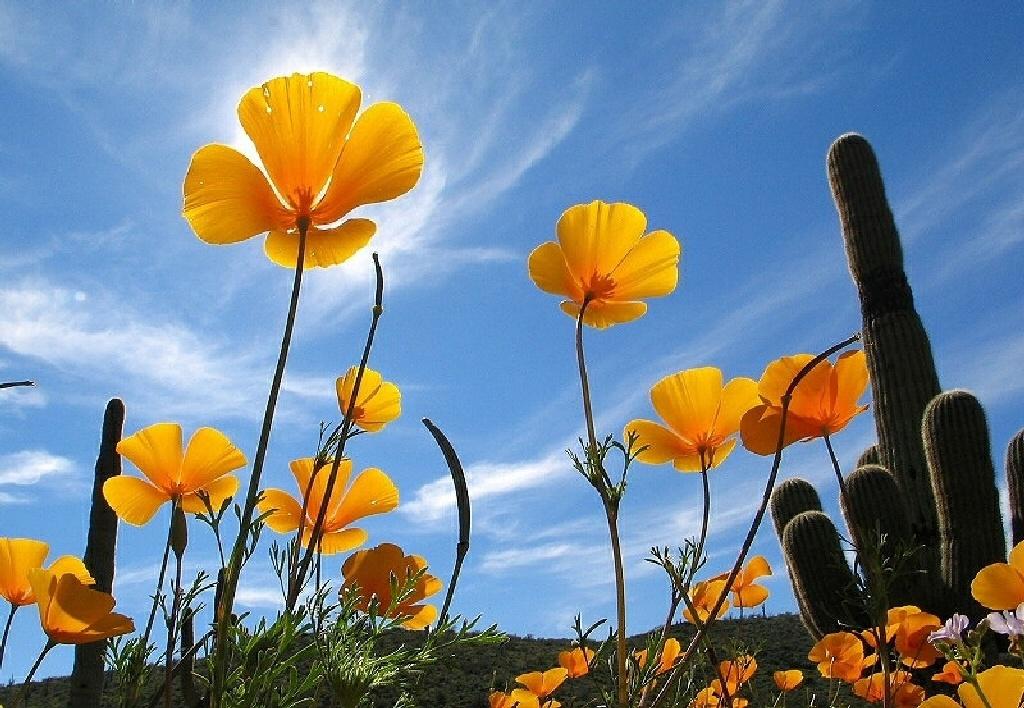 loveflowers manutenzione e progettazione giardini padova: loveflowers manuten...