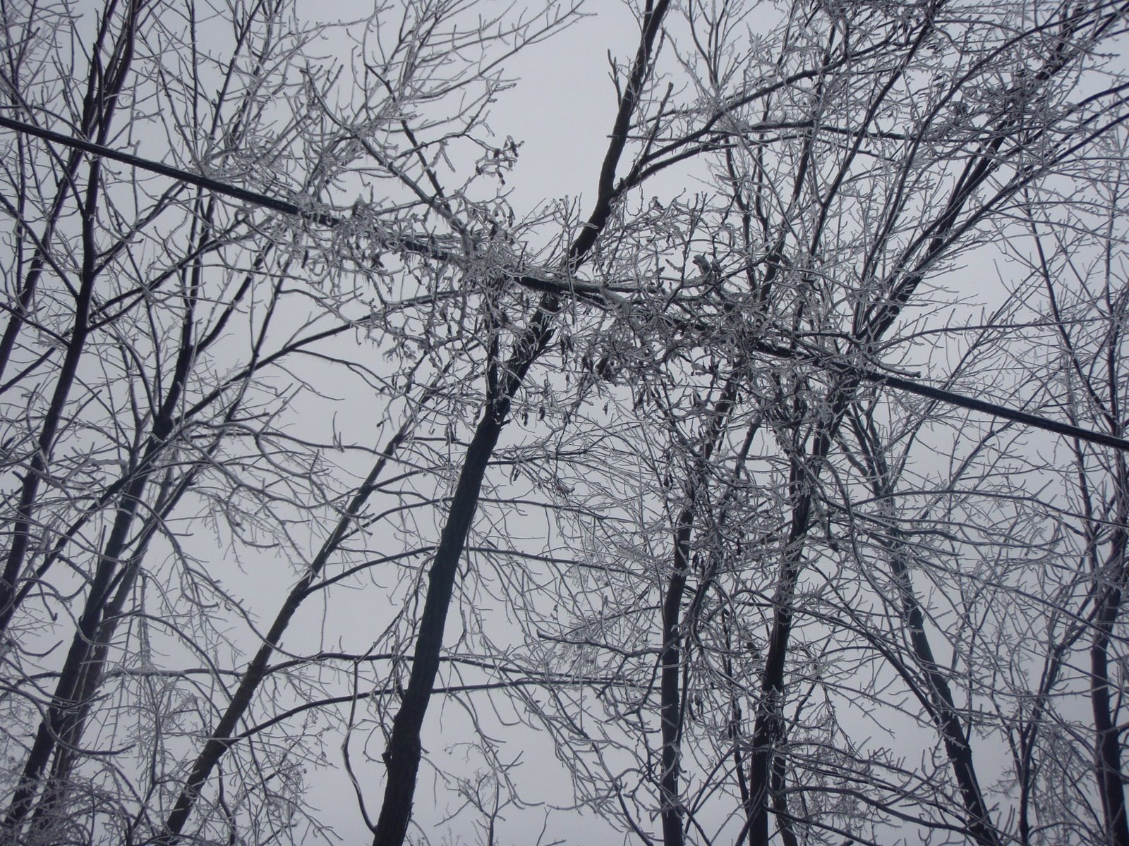 [more+ice+trees+in+power+lines]