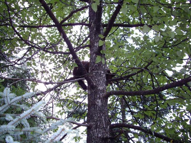 [cub+in+tree+5]