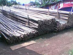 stok bambu