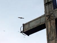 Buitres sobrevolando curiosos