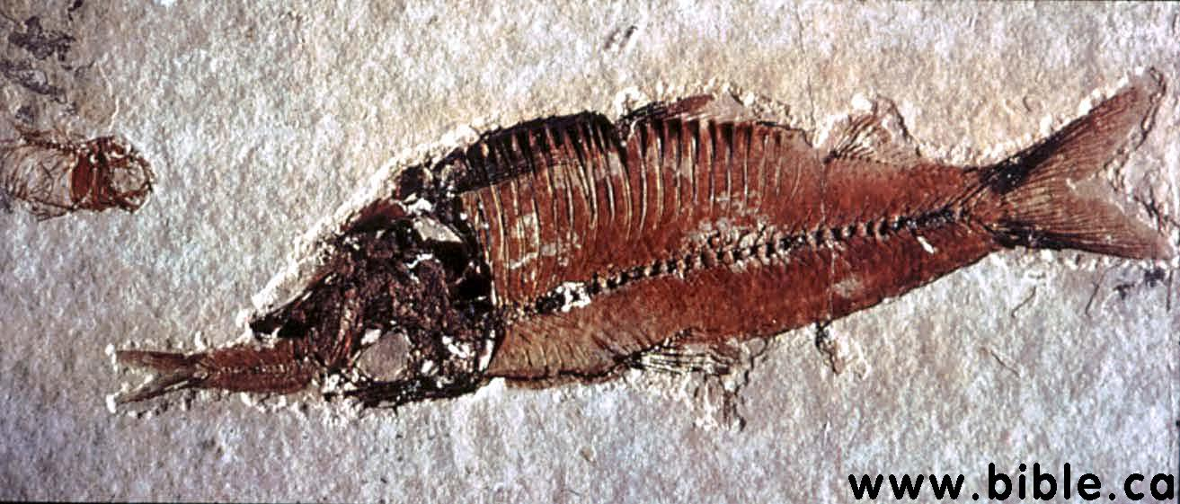 Unaltered Fossils