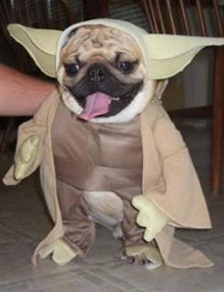 Cão vestido de personagens do StarWars série Meu dono é um IMBECIL - CONECTOU!