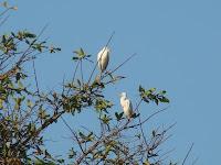 Cinnamon Lodge Bird Trail