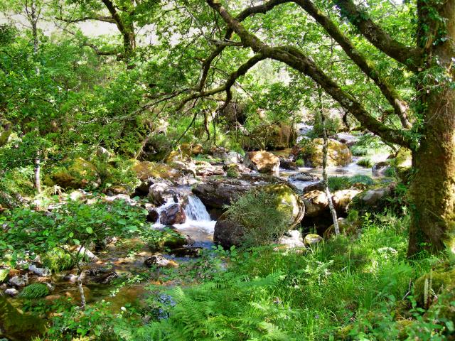 Paisagens de Portugal - Mata de Cabril - A Floresta Original