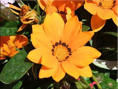 Florido jardín del Hotel de Ville de Calais