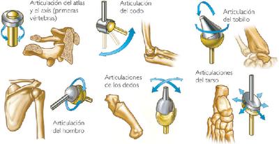 articulaciones estructurales