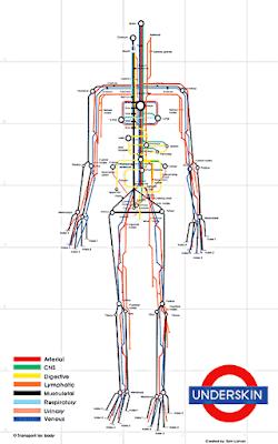Mapa de metro de la Fisiología humana