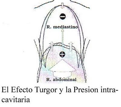 Articulaciones viscerales - Presión intracavitaria