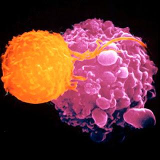 Vibración celular -