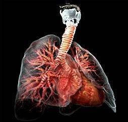 Anatomía trasparente - Imágenes del cuerpo humano transparente II