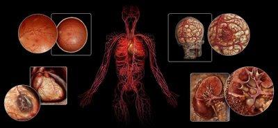 Anatomía - Imágenes del cuerpo humano transparente III
