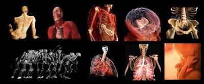 Imágenes del cuerpo humano transparente II