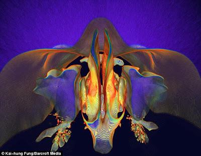 Tomogramas coloridos fosas nasales