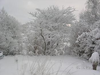 Decembersnö