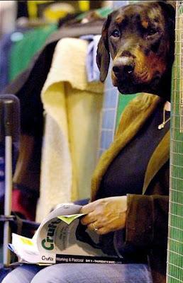 Studious Dog